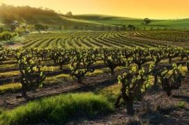 100894_Adelaide_Barossa Valley_d376-16