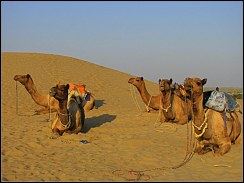 camel dunes