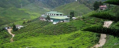 cameron-highlands-610x250