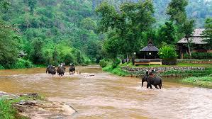 elephant trek