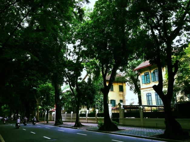 tree lined streets hanoi